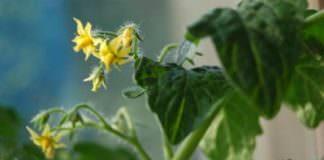 Khái niệm tế bào thực vật