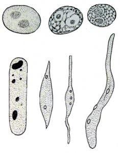 Nhân tế bào của tế bào thực vật