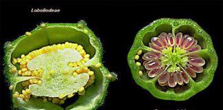 Cấu tạo nhân tế bào thực vật