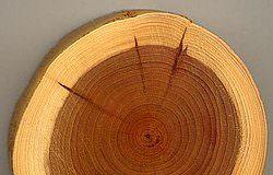 Cấu tạo cấp hai của rễ cây