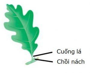 Loại lá cây