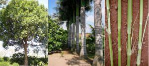 Phân loại thân cây