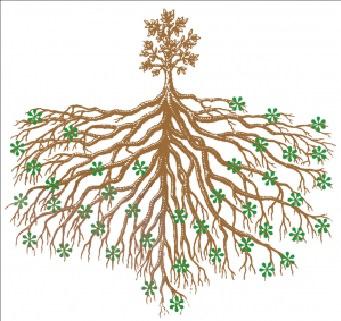Sự chuyển tiếp từ cấu tạo của rễ sang thân