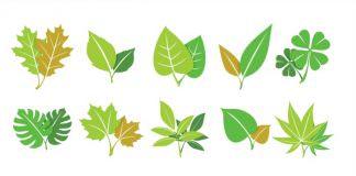 Phân loại lá cây