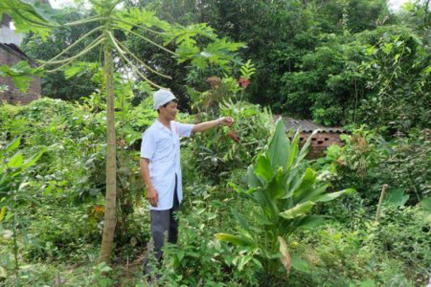 Khai thác và phát triển tài nguyên cây thuốc ở Việt Nam