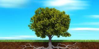Loại rễ cây