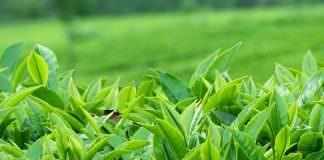 Cơ quan sinh dưỡng của thực vật