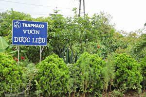 vườn dược liệu