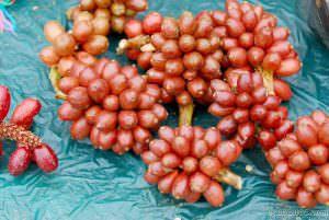 cây thảo quả