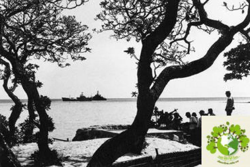 Hệ thực vật và cây thuốc của hai quần đảo Hoàng Sa và Trường Sa của Việt Nam