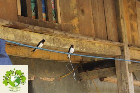 chơi chim ở hà giang