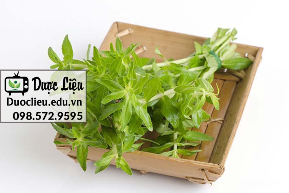 Ngò Om là dạng cây thân thảo